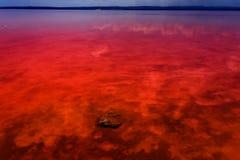 Den salt kusten av Lagunaen Salada de Torrevieja spain royaltyfria foton