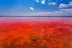Den salt kusten av Lagunaen Salada de Torrevieja spain arkivfoton