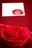 Den sammansatta bilden av den röda rosen med regn tappar Arkivbild