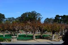 Den San Francisco botaniska trädgården parkerar ingången royaltyfri bild