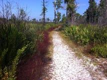 Den sandiga banan till och med Florida skurar på en delstatspark Royaltyfri Fotografi