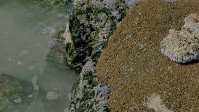 Den sandiga kusten för havet med färgstänk av vågor på vaggar arkivfilmer