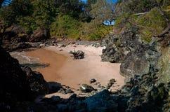 Den sandiga lilla viken eller den lilla skyddade fjärden med vaggar och träd Arkivfoton