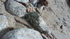 Den sandiga stranden vaggar Arkivfoton