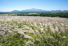 Den Sangumburi krater försilvrar gräs royaltyfri foto