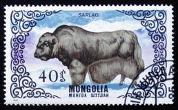 Den Sarlag tjuren, en serie av bilder av `-aveln skrämmer `, circa 1985 Royaltyfri Fotografi