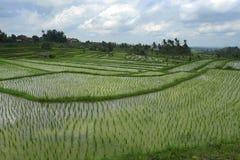 Den sceniska panoramalandskapsikten av fantastiska härliga gröna ris terrasserar risfältfältet i Jatiluwih Bali Royaltyfri Fotografi