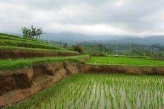 Den sceniska panoramalandskapsikten av fantastiska härliga gröna ris terrasserar risfältfältet i Jatiluwih Bali Fotografering för Bildbyråer