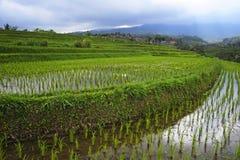 Den sceniska panoramalandskapsikten av fantastiska härliga gröna ris terrasserar risfältfältet i Jatiluwih Bali Royaltyfri Foto
