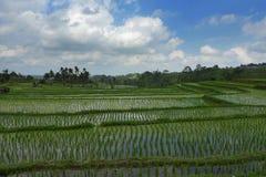 Den sceniska panoramalandskapsikten av fantastiska härliga gröna ris terrasserar risfältfältet i Jatiluwih Bali Arkivfoton