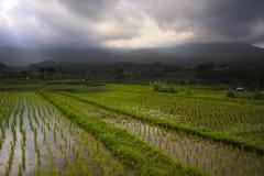 Den sceniska panoramalandskapsikten av fantastiska härliga gröna ris terrasserar risfältfältet i Jatiluwih Bali Royaltyfria Foton
