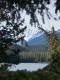 Den sceniska sikten av berg och skogen sörjer igenom filialer royaltyfri fotografi