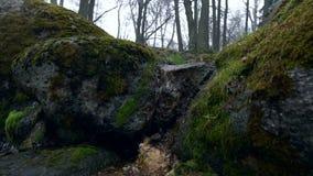 Den sceniska sikten av en liten vik i Kadriorg parkerar arkivfilmer