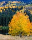 Den sceniska skönheten av Colorado Rocky Mountains - det Kebler passerandet Royaltyfri Fotografi