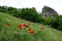 Den scharlakansröda blomman fotografering för bildbyråer