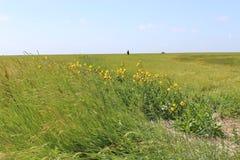Den Schleswig-Holstein nationalparken, nordlig Tyskland Royaltyfri Bild