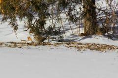 Den Schnee weg erhalten lizenzfreie stockfotografie
