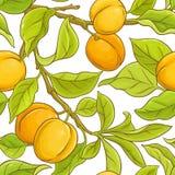 Den seamless aprikosen mönstrar Royaltyfri Bild