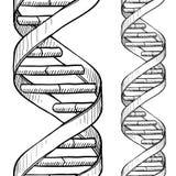 Den Seamless dubbla spiralen för DNA skissar Arkivbilder