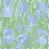 Den Seamless vektorn mönstrar med irises Arkivfoton