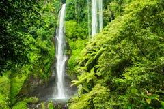 Den Sekumpul vattenfallet i Bali omgav vid den tropiska skogen Arkivfoton
