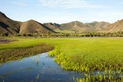 Den Selenge floden royaltyfri foto