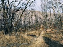 Den sena nedgångpanoramaskogen beskådar att fotvandra, att cykla, hästryggslingor till och med träd på den gula gaffeln och Rose  royaltyfria bilder