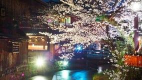 Den Shirakawa floden i Gion District av Higashiyama avvärjer, Kyoto, Japan under den Cherry Blossom säsongen arkivfoton