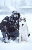 Den Siberian huskyen förföljer vinterståenden Royaltyfria Foton