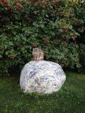 Den Siberian katten mjauar Fotografering för Bildbyråer