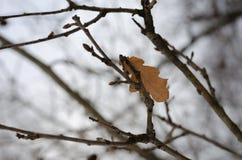 Den sist gula leafen arkivbilder