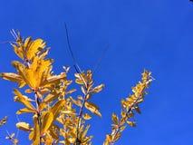 Den sist hösten lämnar royaltyfria bilder