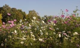 Den sista hösten blommar i parkera royaltyfria foton