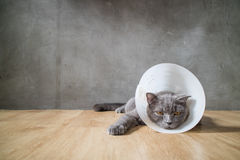 Den sjuka katten med trattkottekragen förhindrar honom skrapan hans öra Arkivfoton