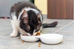 Den sjuka katten äter älsklings- mat Arkivbild