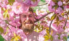 Den sk?ggiga mannen med stilfull frisyr med sakura blommar p? bakgrund Hipster i near filial f?r rosa skjorta av sakura man arkivfoto