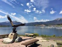 Den skalliga örnen på Dillon Lake royaltyfri fotografi