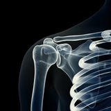 Den skelett- skuldran vektor illustrationer