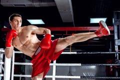 Den skickliga boxningmästaren visar hans expertis Royaltyfri Foto