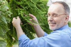 Den skickliga gamla trädgårds- arbetaren planterar vegetation Arkivbilder