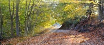 den skrivande in skogen rays sunen Royaltyfri Bild