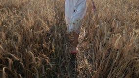 Den slanka kvinnlign lägger benen på ryggen att gå i moget vetefält stock video