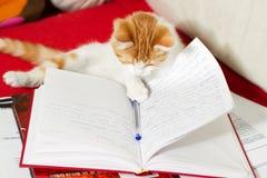 Den små katten lärer Arkivbilder