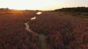 Den smala floden är bevuxen med vasser Flyga längs en smal flod Solstråle från solnedgång arkivfilmer