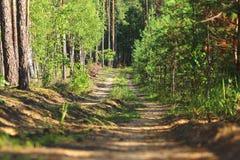 Den smala skogvägen Arkivfoto