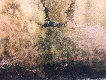 Den smutsiga väggen, väggarna är smutsig, full av gröna och svarta fläckar royaltyfri fotografi