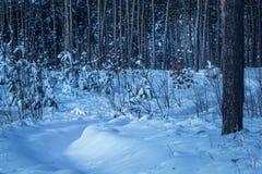 Den snöig banablytaket in i en fantastisk vinterskog med högväxt sörjer träd inget omkring royaltyfria bilder
