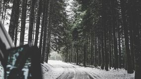 Den snöig banan i en härlig skog med högväxt sörjer träd royaltyfri fotografi