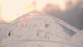 Den snöig filialen i vinter parkerar på solnedgången Närbild lager videofilmer
