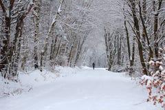 Den snöig skoglandskapvintern går Arkivbild